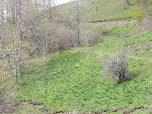 Crkvina Kolašin, Kolašin